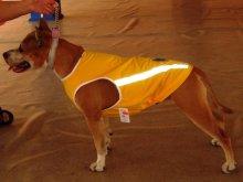 Наши клиенты. По мнению владельцев прохожие очень доброжелательно относятся к одетым собачкам!