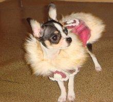 Пальто и куртки из мягкой ткани в ассортименте. Размеры и цвета разные, для мелких собак.