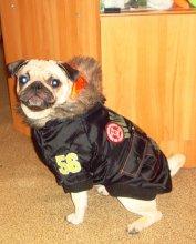 Куртки в ассортименте. Цвета разные. Некоторые собачки мелких пород не всегда готовы к надеванию комбинезона. Легкая удобная курточка без задних лап - отличный вариант первой одежды!