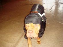Шапка для крупных собак из плащевки на подкладе, цена 340 руб.