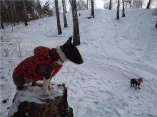 Наши клиенты. Толстовка из цветного флиса для средних и крупных пород! Согреет и украсит к/ш собак в любую погоду.