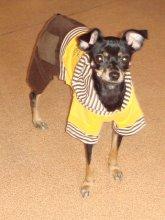 Летний костюмчик для мелких собак.