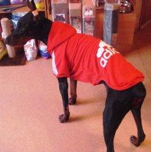 """Толстовки """"Adidog"""" для средних и крупных собак. Есть ещё такие же """"Супермен"""". Цена 1100-1190руб."""