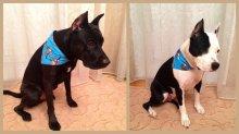 Банданки на шею для крупных собак. Расцветки разные.