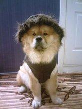 Легкая куртка с капюшоном. На фото чау Филя (Ерофей)