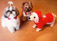 Самый удобный новогодний костюм для собак и кошек - воротничок! Красиво, недорого и новогоднее настроение обеспечено! Можно носить дома и на улице. Цена 220 - 350 руб.