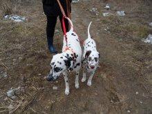 Сворка нейлоновая для мелких, средних и крупных собак. Цена 367 и 657 руб.