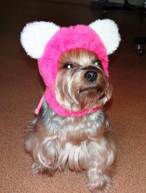 вязание шапок для собак мелких пород