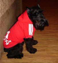 Теплые толстовки в спортивном стиле для мелких и средних декоративных собак.