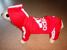 Спортивный костюм из утепленного трикотажа для собак. Подходит худеньким! Цена 935руб.
