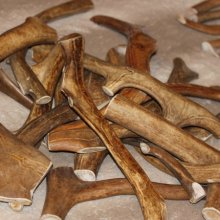 Рога северного оленя - натуральный гипоаллергенный продукт для собак. Чистят зубы, защищают квартиру от погрызов, долговечны. Цена 300 руб. за 100г.
