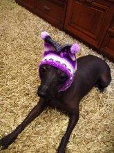 Новинка! Вязаные шапки для собак. Не сползает, закрывает шею и уши собаки. Ручная работа, размеры разные. Цена от 600руб.