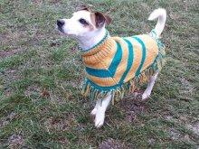 Вязаное пончо очень удобно для активных собак. На фото джек-рассел, живёт в Австрии.